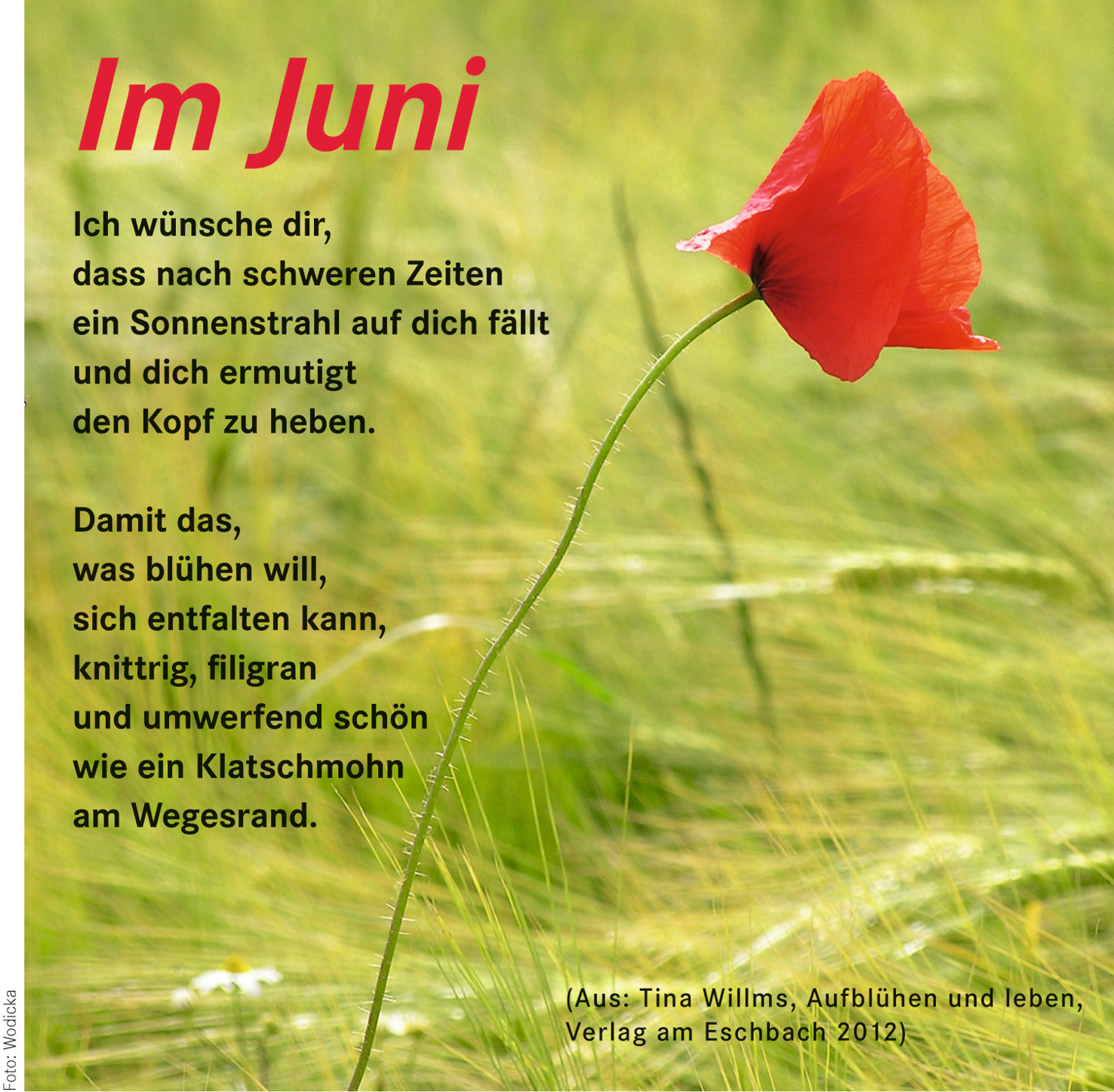 Im Juni – Kirchengemeinde Oldendorf