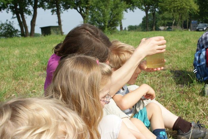 Was tümmelt sich im Teichwasser?