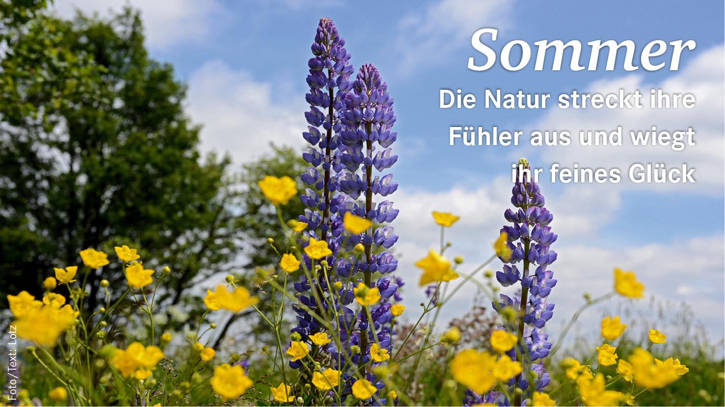 Spruch Sommer 164_3602_rgb