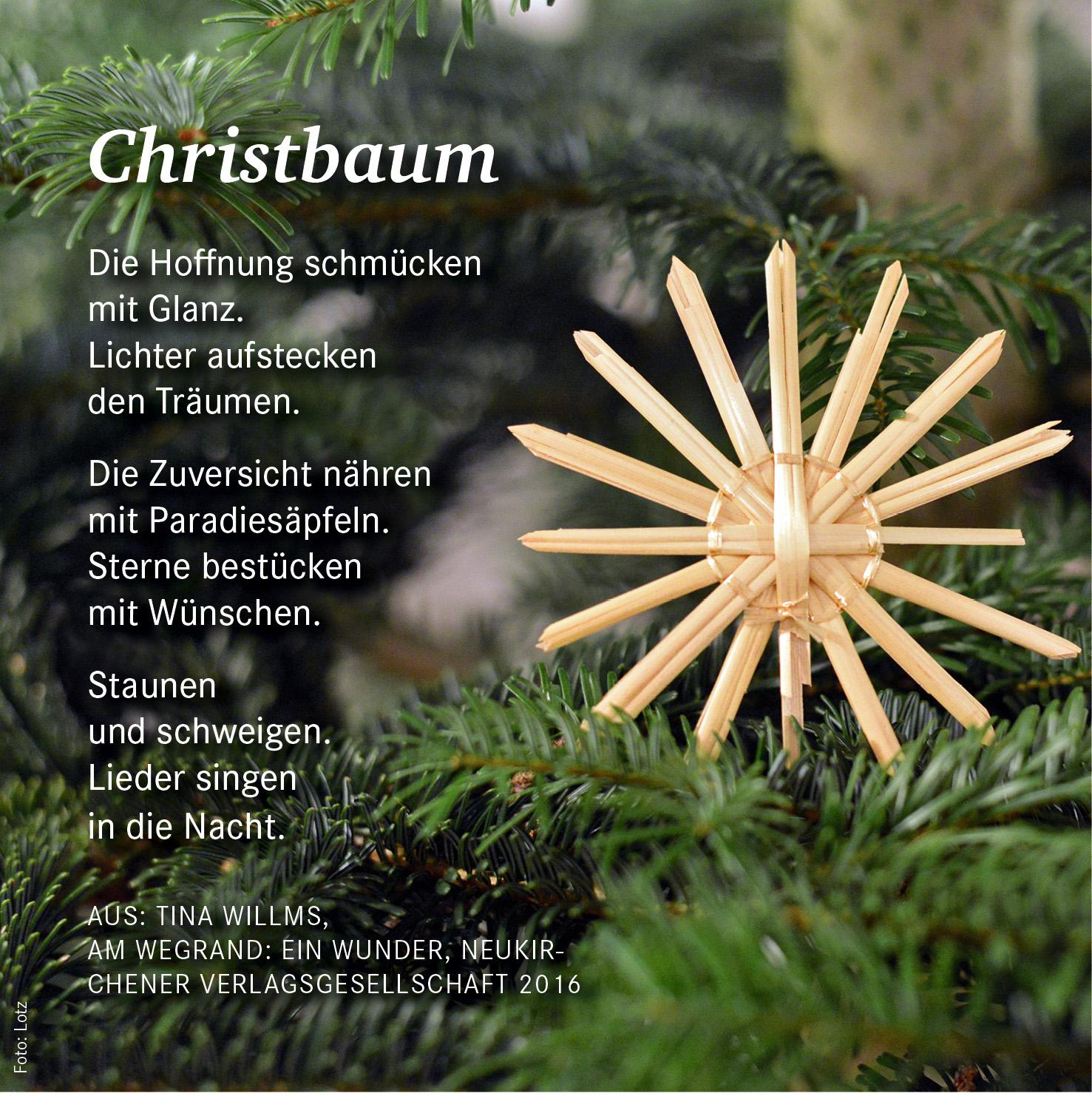 weihnachten-christbaum-171_4502_rgb